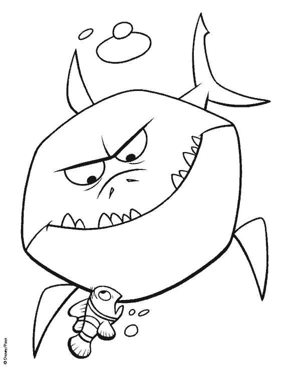 Раскраска акула. Скачать в поисках Немо.  Распечатать в поисках Немо