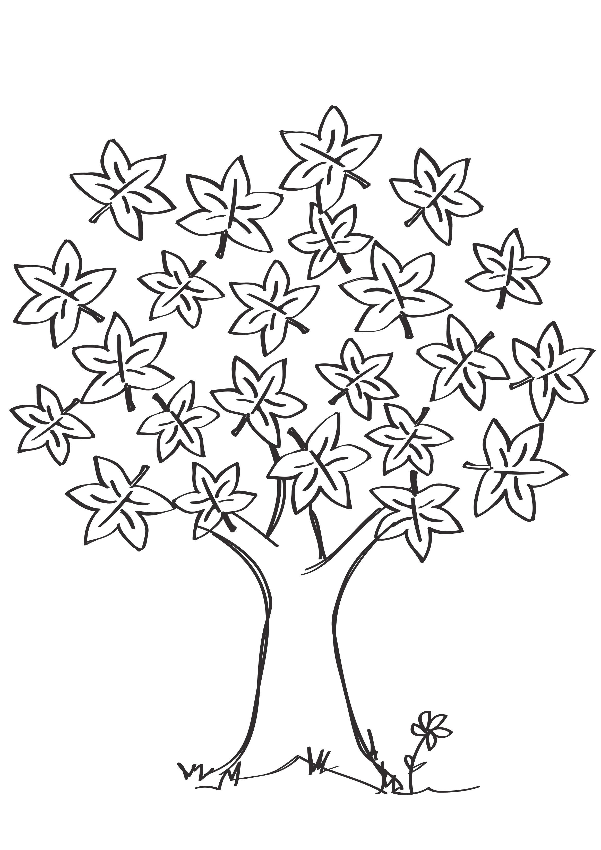 Раскраска  Клен. Скачать деревья.  Распечатать деревья