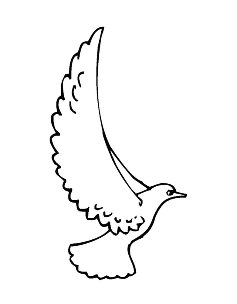 Раскраска Голубь с большими крыльями. Скачать Голубь.  Распечатать Голубь