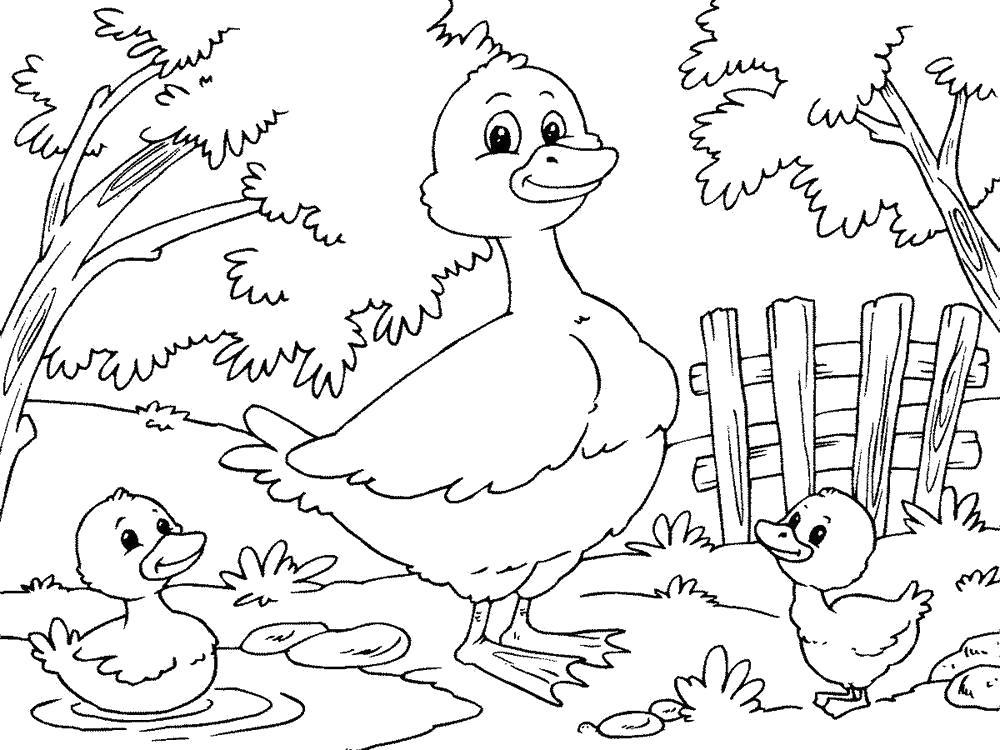 Раскраска  утка с утятами. Скачать Утка.  Распечатать Домашние животные