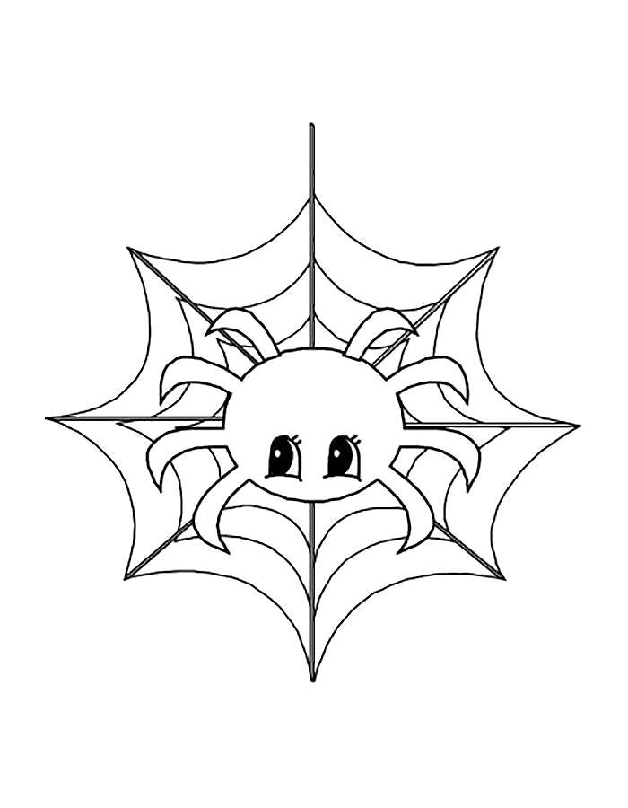 Раскраска  паук сплел паутину. Скачать Паук.  Распечатать Паук