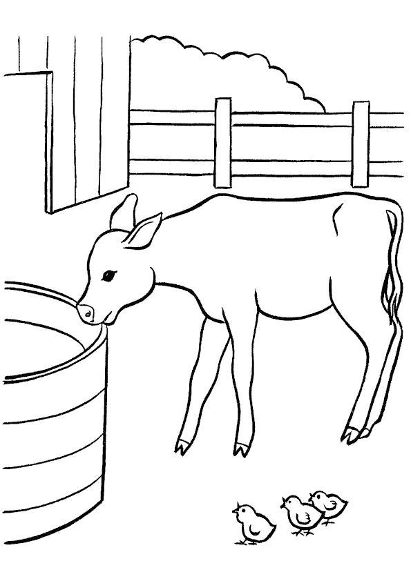 Название: Раскраска В деревне у бабушки. Раскраски. Теленок пьет воду. Категория: Домашние животные. Теги: Цыплята, Теленок.