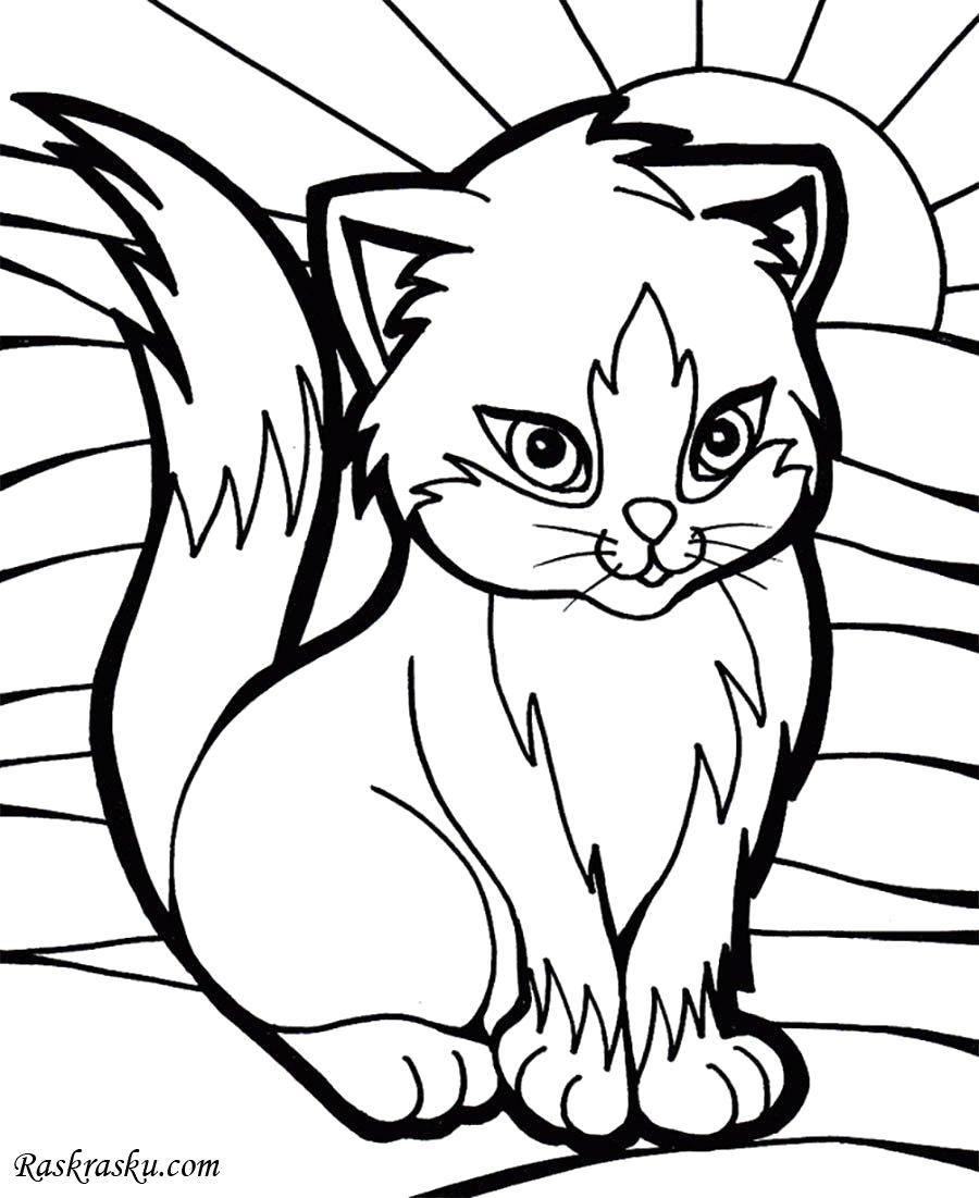 Раскраска кошка, красивая кошка. Скачать кошка.  Распечатать кошка