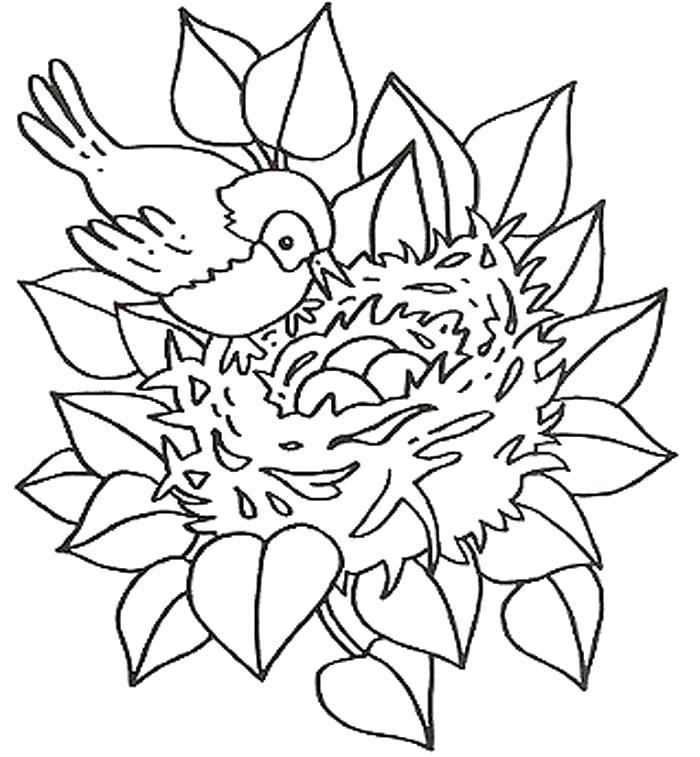 Раскраска Гнездо птицы. Скачать .  Распечатать