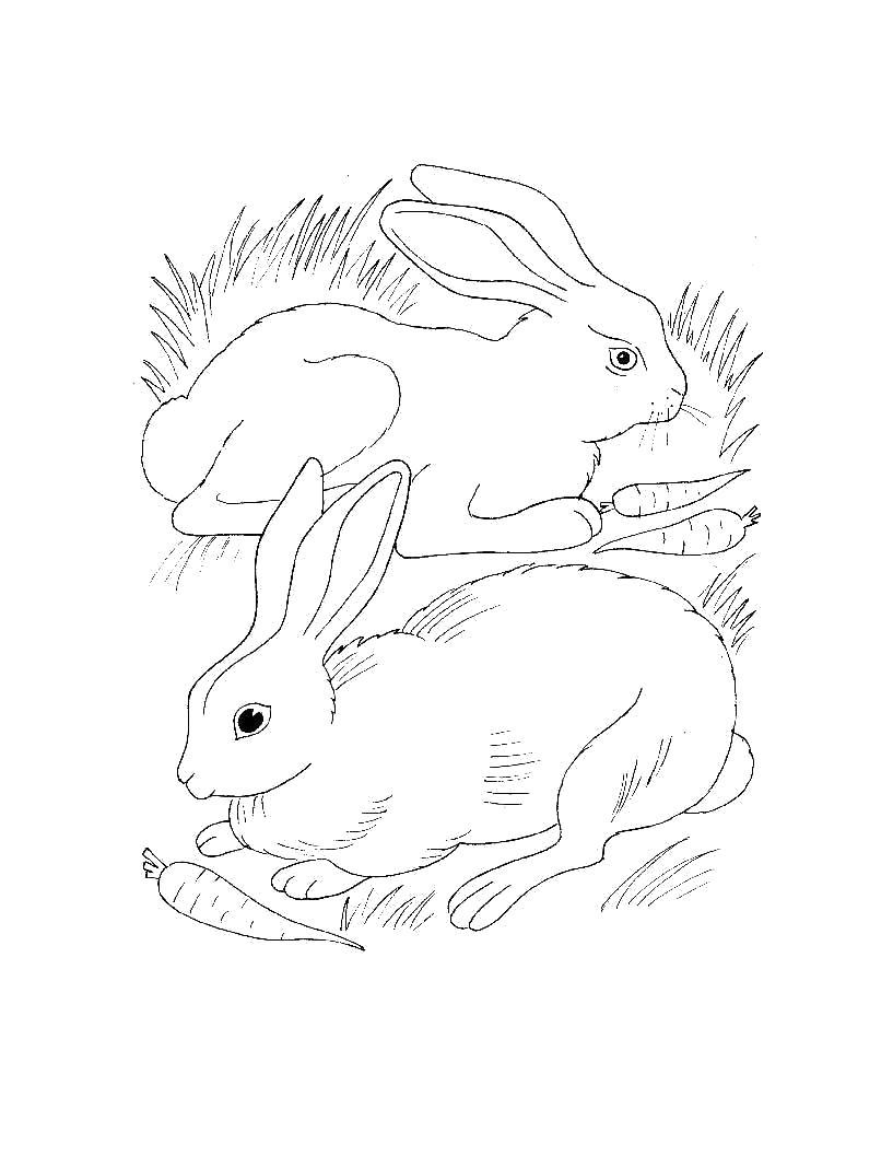Раскраска  для самых маленьких  Домашние животные. Скачать Заяц.  Распечатать Домашние животные