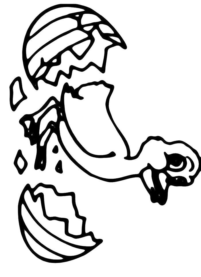 Раскраска  Вылупившийся утенок. Скачать Утка.  Распечатать Домашние животные