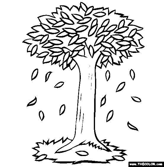 Раскраска дерево осенью . Скачать дерево.  Распечатать Контуры дервеьев