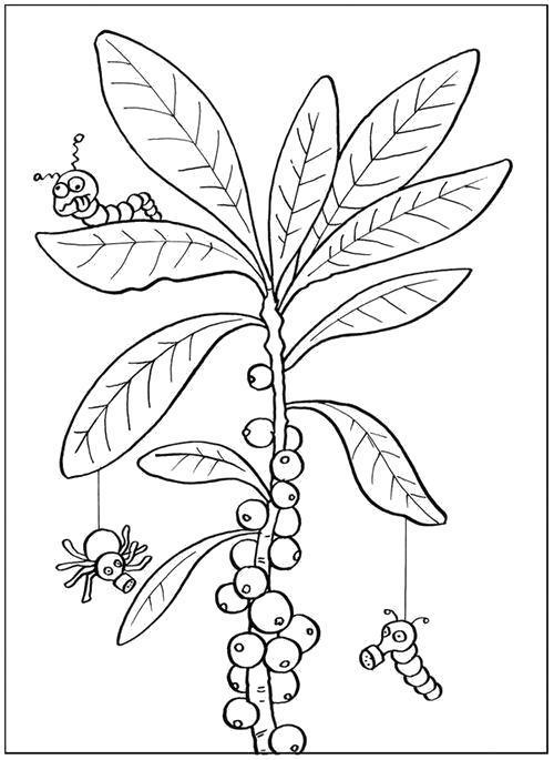 Раскраска  Насекомые на ветке. Скачать листья.  Распечатать листья