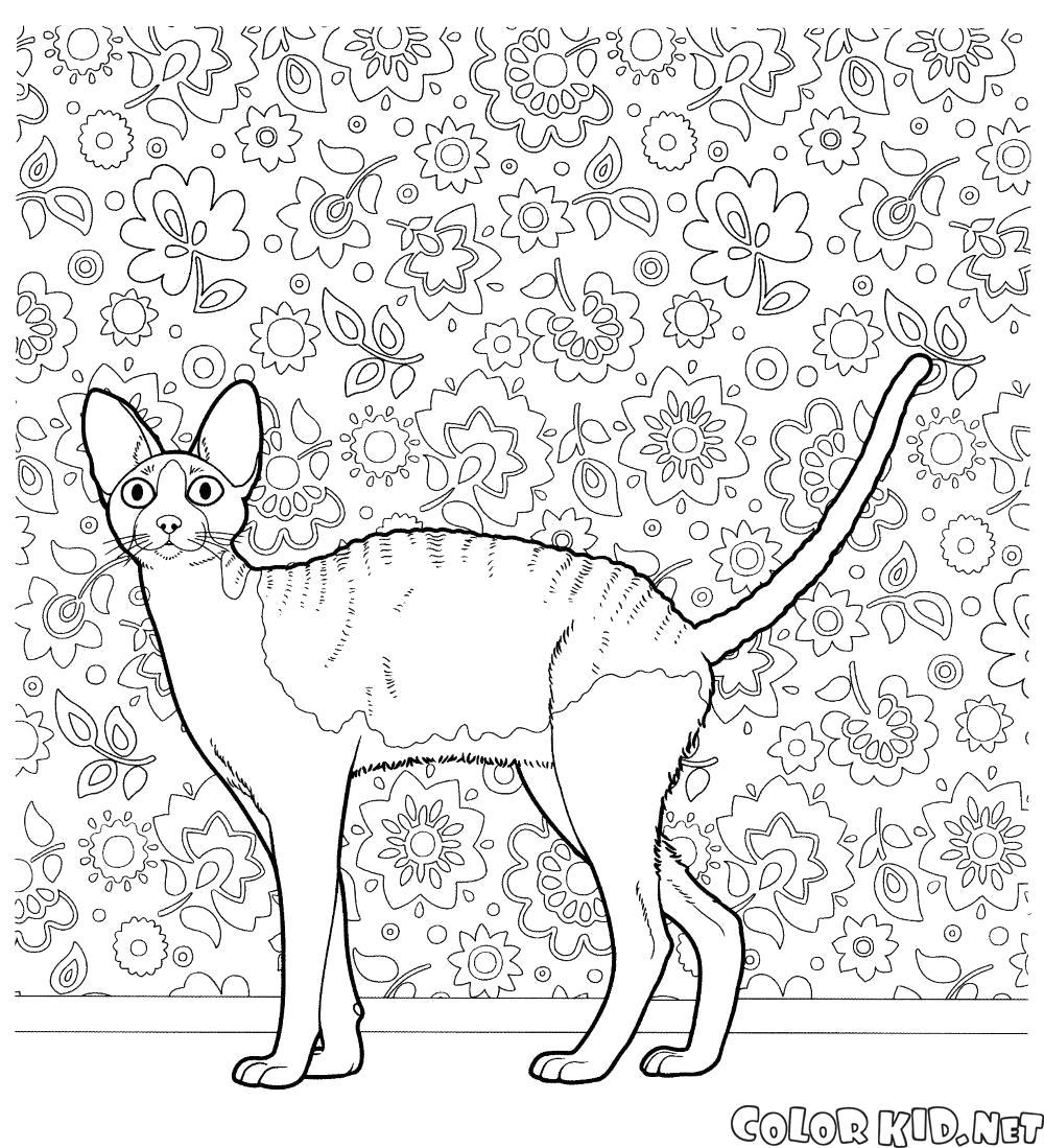 Раскраска Корниш рекс. Скачать кошка.  Распечатать кошка