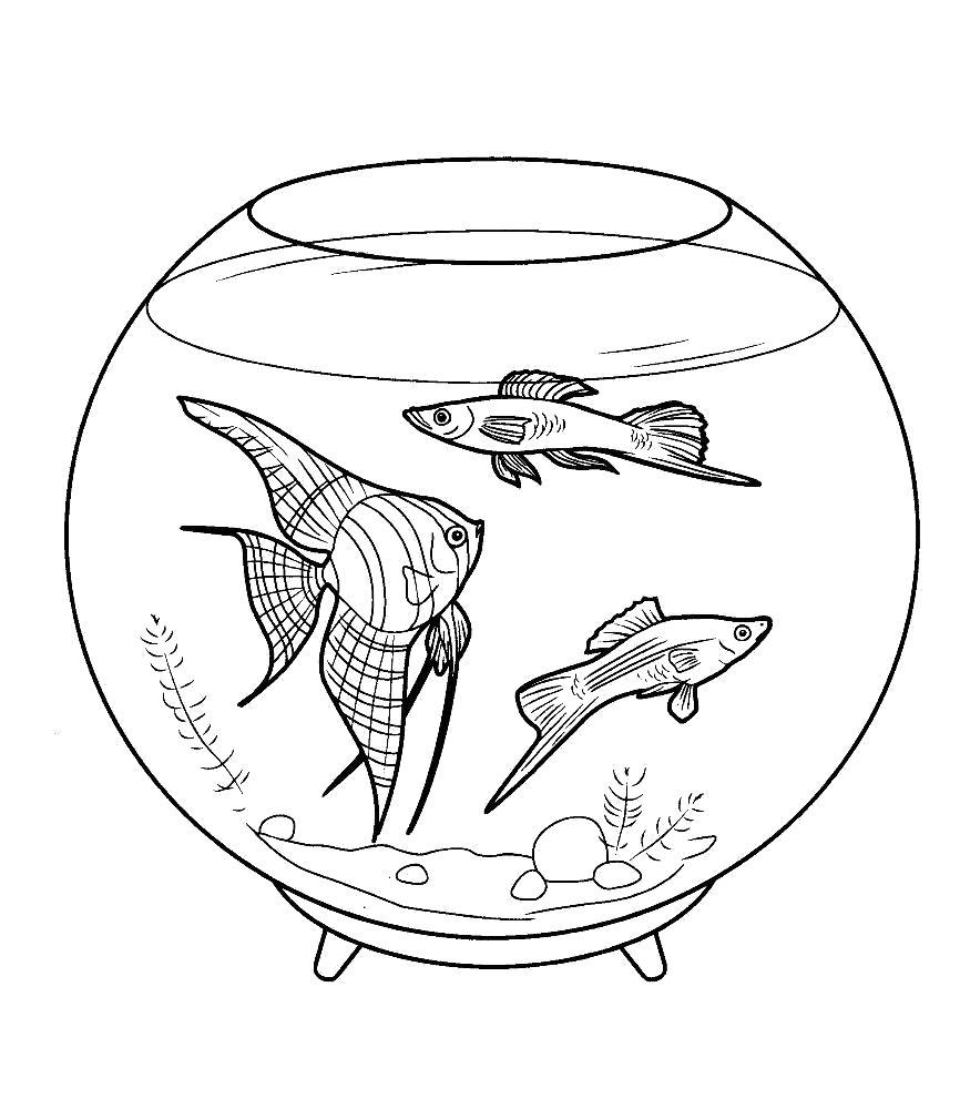 Раскраска Три рыбы плавают в аквариуме. Скачать Аквариумные рыбы.  Распечатать Домашние животные