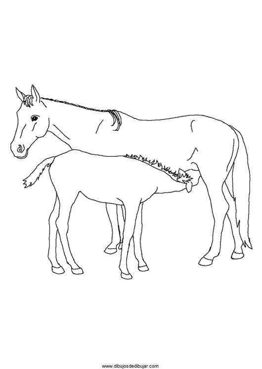 Раскраска  лошадка лошадка, жеребенок, лошади,  для детей. Скачать Лошадка.  Распечатать Лошадка