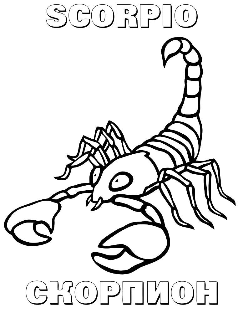 Раскраска Скорпион. Скачать Знаки Зодиака.  Распечатать Знаки Зодиака