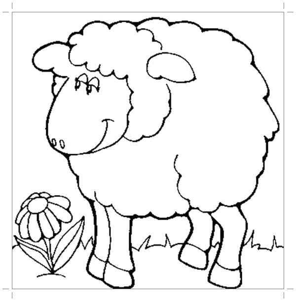 Раскраска Овца картинка . Скачать Овца.  Распечатать Овца