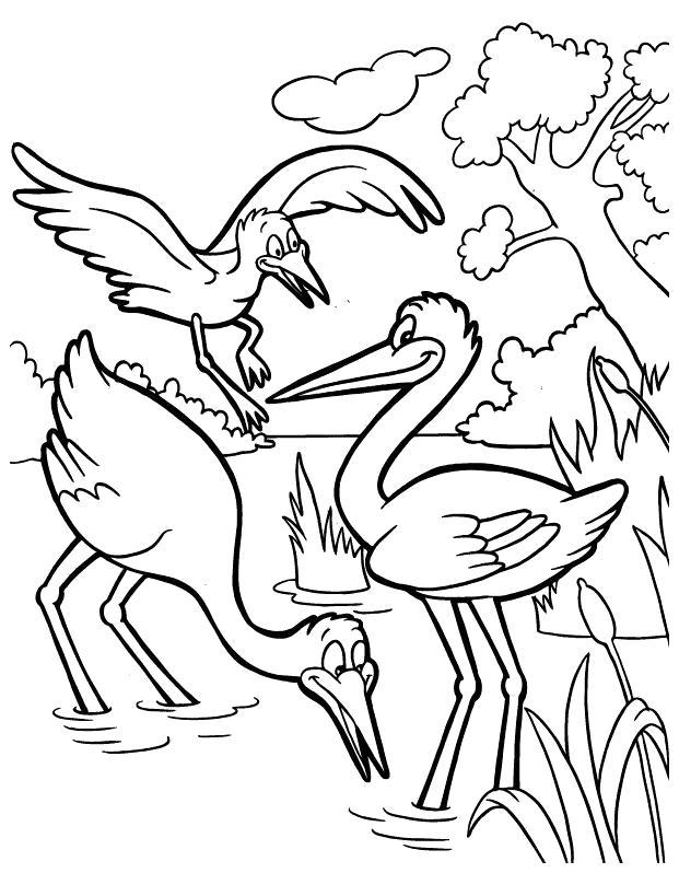 Раскраска   птицы. Скачать .  Распечатать