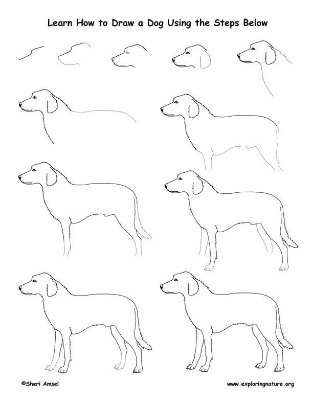 Раскраска собака как нарисовать. Скачать как нарисовать.  Распечатать Учимся рисовать