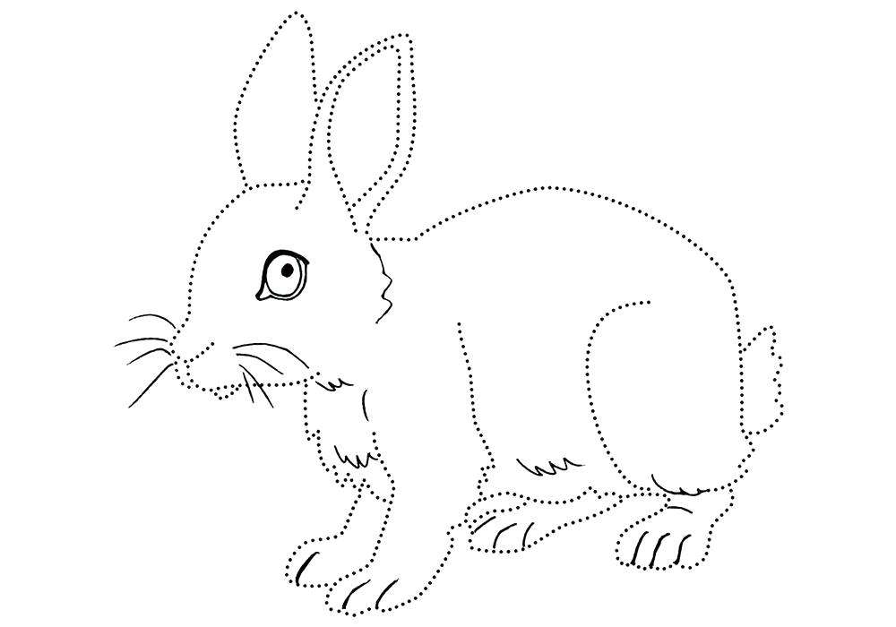 Раскраска  кролик для детей. Заяц обведи по точкам.. Скачать Заяц.  Распечатать Домашние животные
