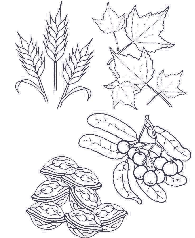 Раскраска Расскажи как это связано с осенью. Скачать Осень.  Распечатать Времена года
