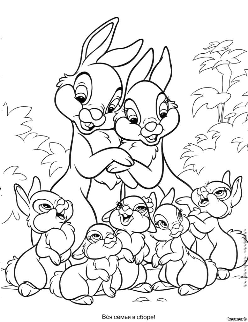 Раскраска Семья зайчат. Скачать Заяц.  Распечатать Домашние животные
