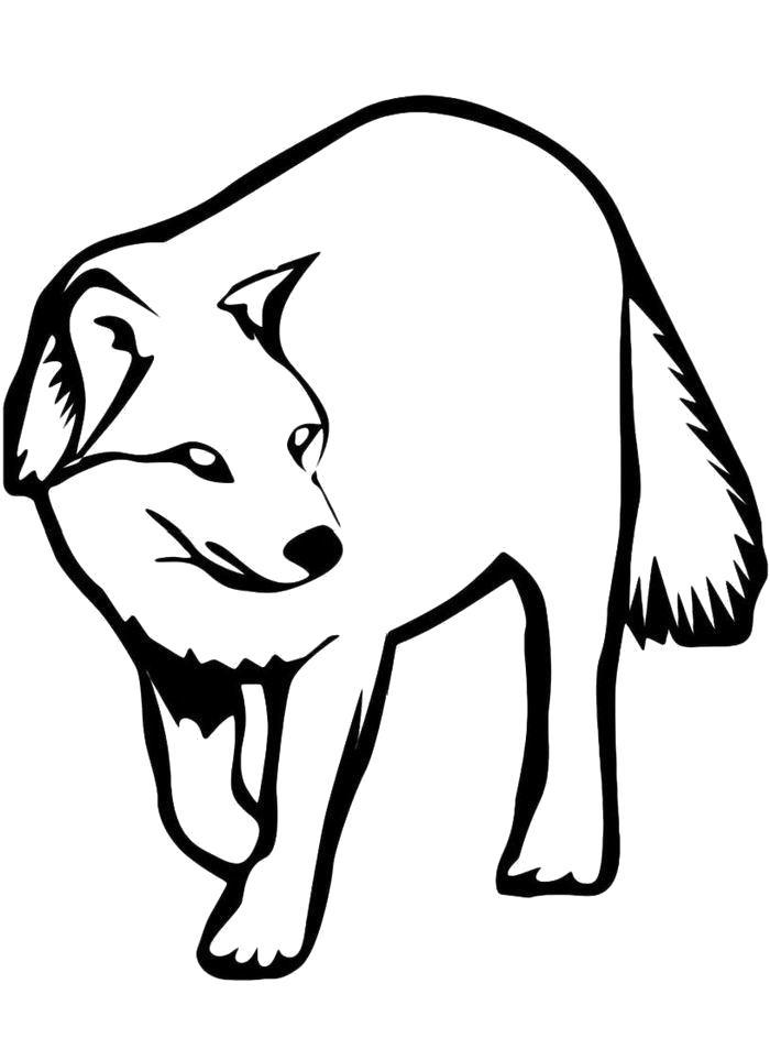 Раскраска Красивый Волк. Скачать .  Распечатать