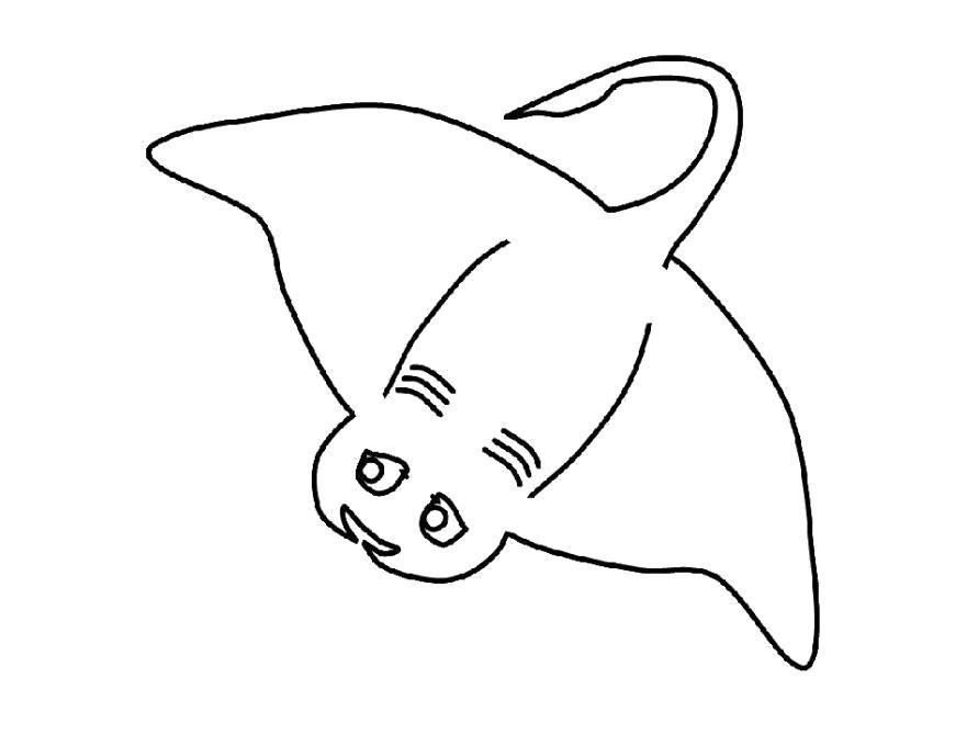 Раскраска Скат. Скачать скат.  Распечатать Морские животные