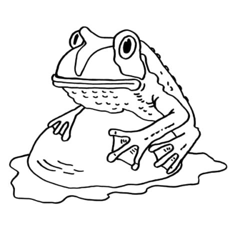 Раскраска лягушка на камне. Скачать лягушка.  Распечатать лягушка