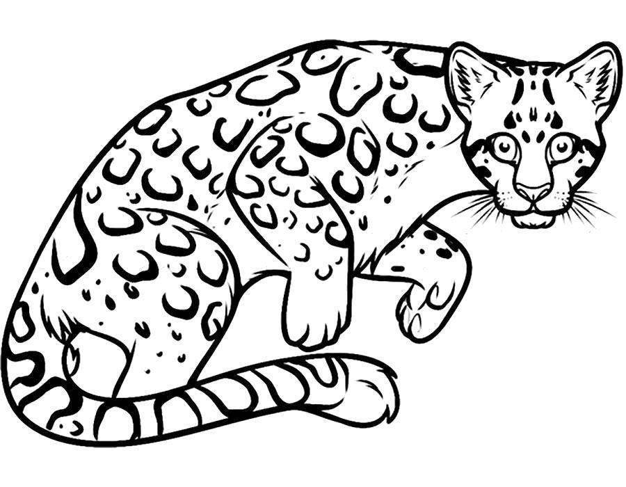Раскраска  леопард. Скачать .  Распечатать