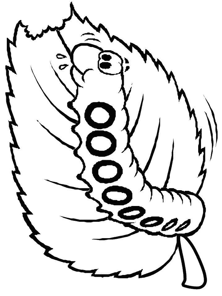 Раскраска Гусеница на листе. Скачать Гусеница.  Распечатать Насекомые