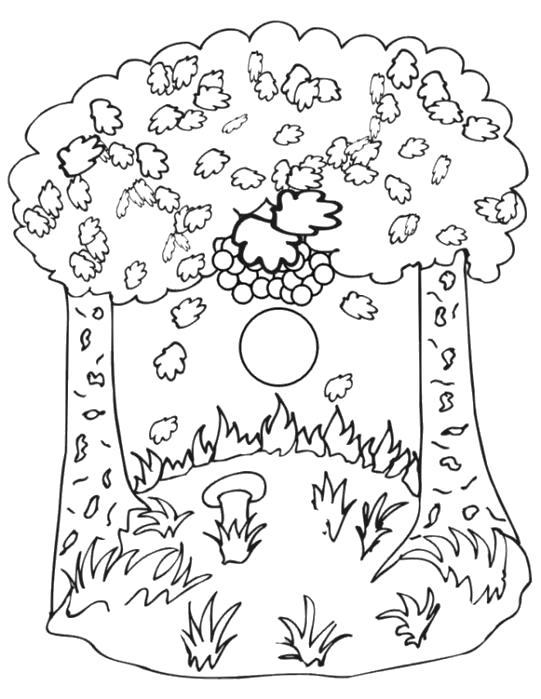 Раскраска листопад грибы. Скачать Осень.  Распечатать Осень