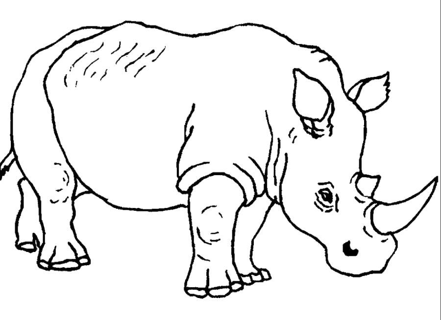 Раскраска Носорог большой . Скачать Носорог.  Распечатать Дикие животные