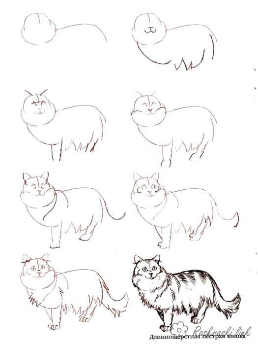 Раскраска  кот  кот как нарисовать кота. Скачать как нарисовать.  Распечатать Учимся рисовать