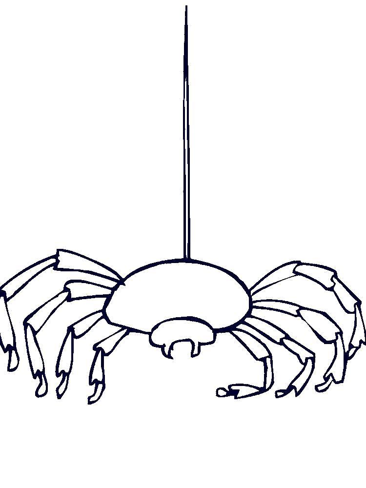 Раскраска  паук висит на паутине. Скачать Паук.  Распечатать Паук