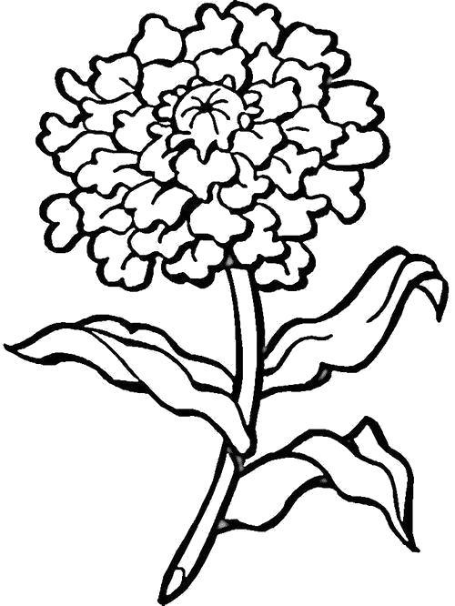 Раскраска  красивый цветок. Скачать Цветы.  Распечатать Цветы