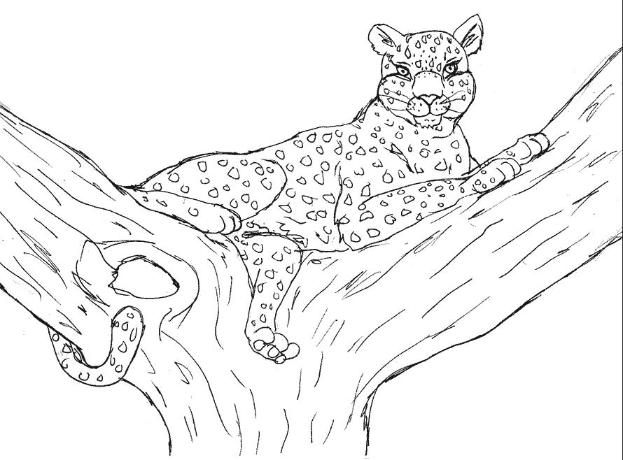 Раскраска леопард лежит на дереве. Скачать леопард.  Распечатать леопард