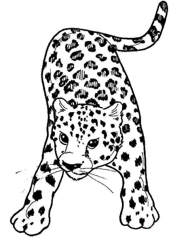 Раскраска  - крадущийся леопард. Скачать .  Распечатать