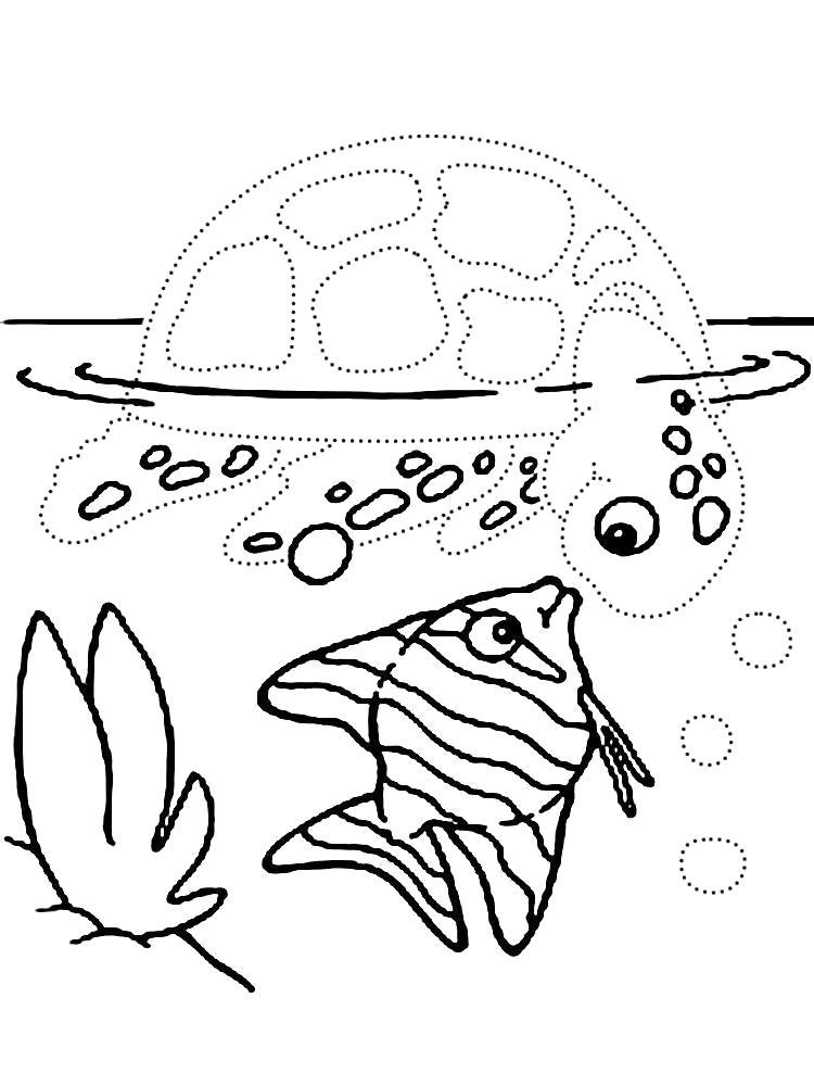 Раскраска Обвести по точкам рисунки с морскими обитателями и раскрасить их. Скачать по точкам.  Распечатать по точкам