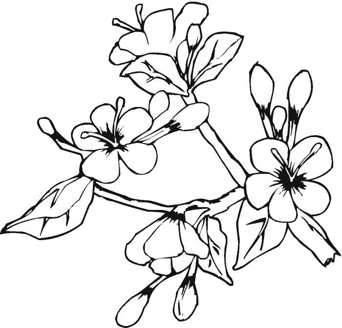 Раскраска рисунки цветов. Скачать .  Распечатать