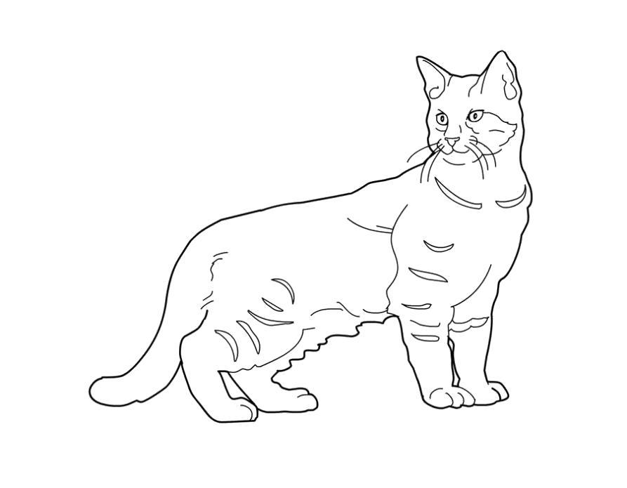 Раскраска Разукрашка кошка . Скачать кошка.  Распечатать Домашние животные