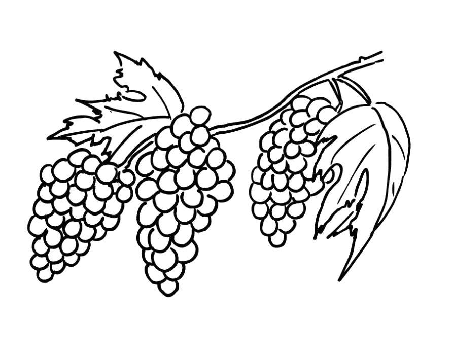 Раскраска Разукрашка виноград детская. Скачать виноград.  Распечатать ягоды