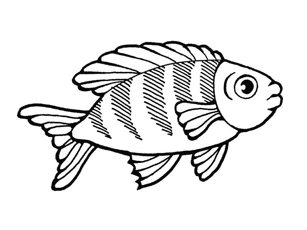 Раскраска Рыба, красноперка. Скачать рыба.  Распечатать рыба