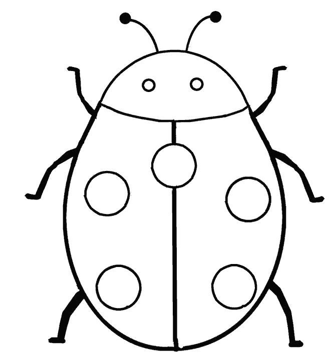 Раскраска  насекомые божья коровка,насекомые,божья коровка  . Скачать Божья коровка.  Распечатать Божья коровка