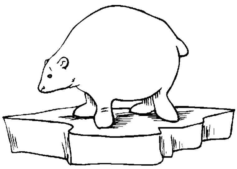 Раскраска Полярный медведь. Скачать Мишка.  Распечатать Мишка