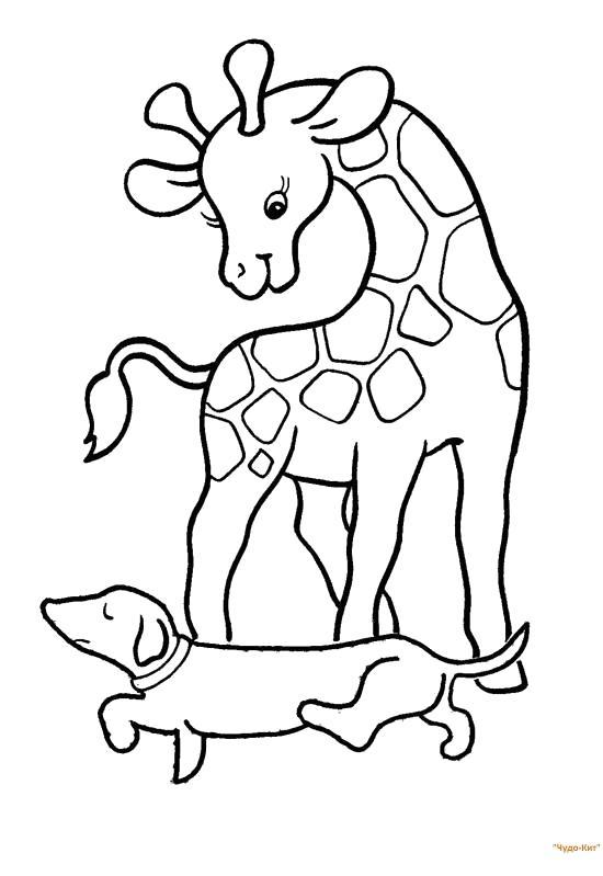 Раскраска жираф играется с собакой. Скачать жираф.  Распечатать Дикие животные