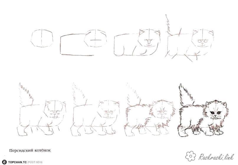 Раскраска  котенок как нарисовать кота. Скачать как нарисовать.  Распечатать Учимся рисовать