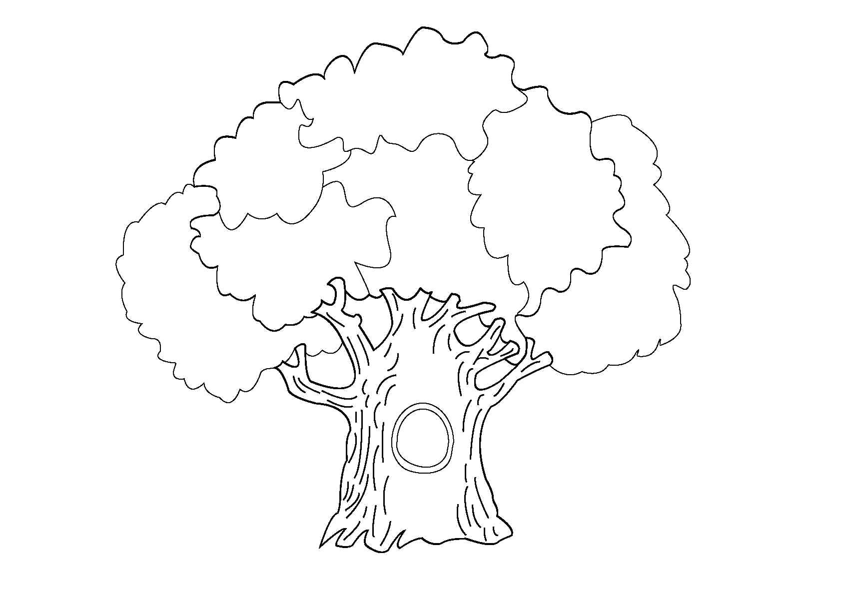 Раскраска дуб с дуплом. Скачать деревья.  Распечатать деревья
