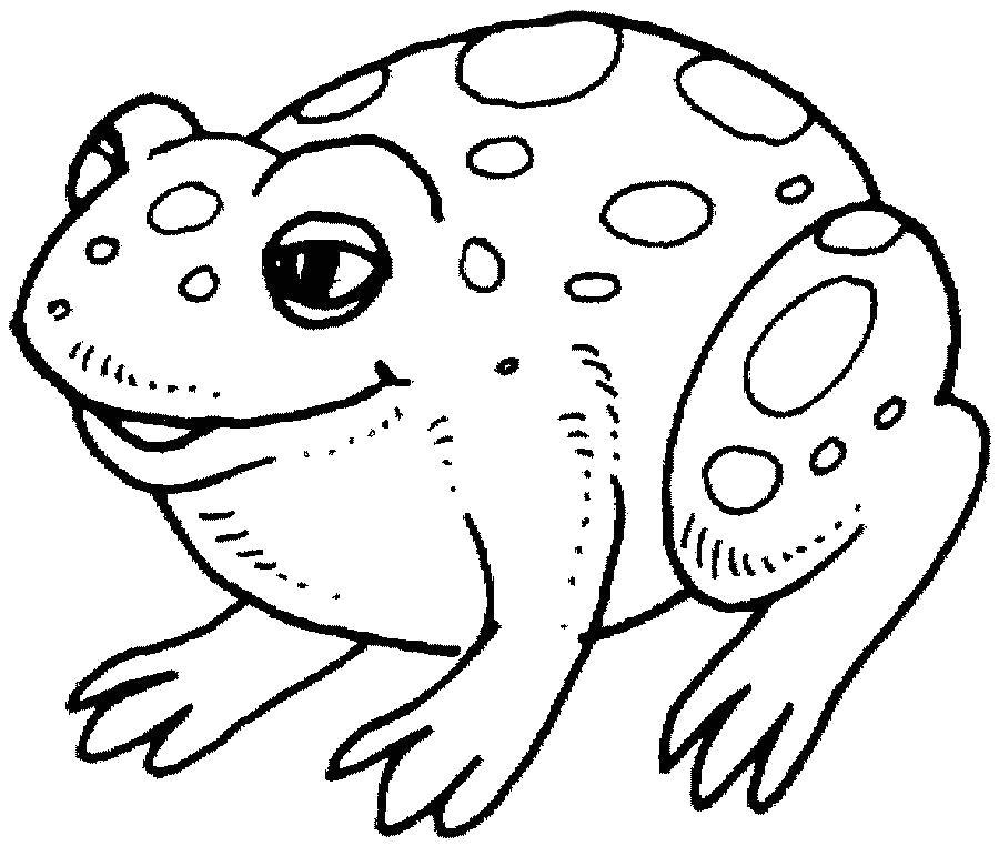 Раскраска Лягушка. Скачать животных.  Распечатать животных