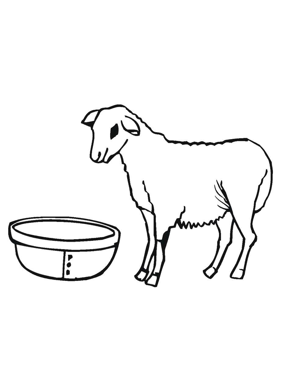 """Раскраска  """"коза"""" . Скачать Коза.  Распечатать Домашние животные"""