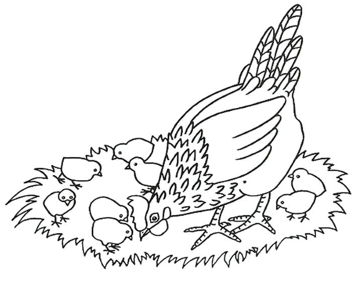 Раскраска Курица мама. Скачать .  Распечатать