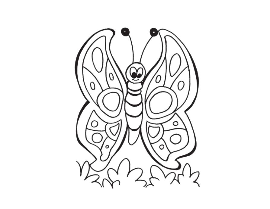Раскраска  бабочка красавица. Скачать бабочка.  Распечатать бабочка