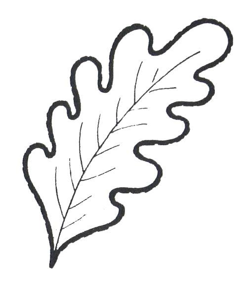 Раскраска  Лист дуба, скачать и распечатать раскраску раздела Листья. Скачать лист.  Распечатать лист