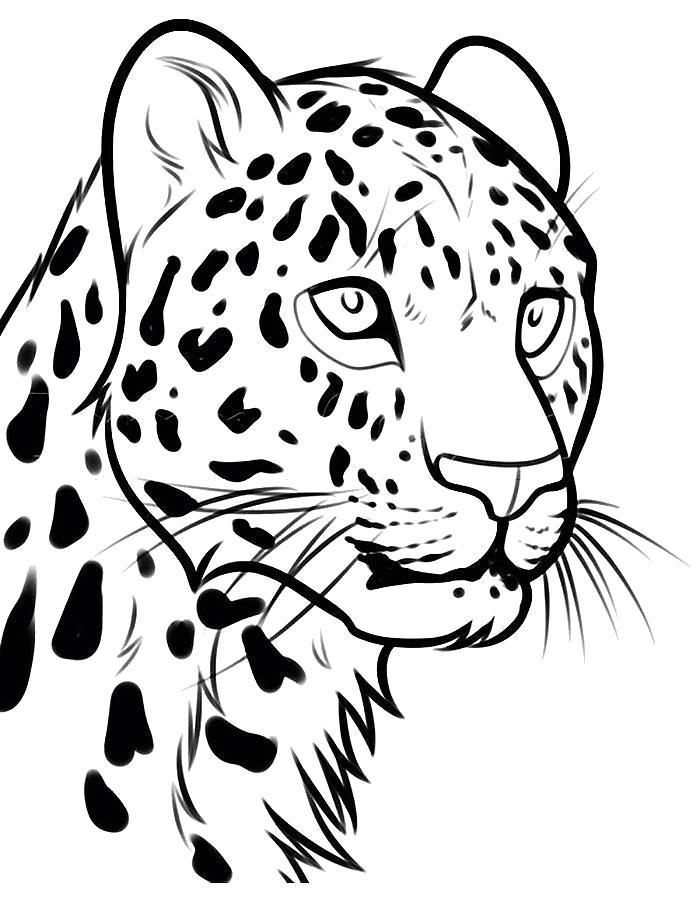 Раскраска Красивый леопард. Скачать .  Распечатать